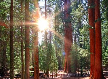 Sequoia National Park-Encuentro Taller